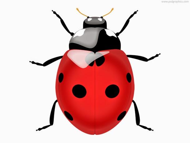Ladybug Icon PSD