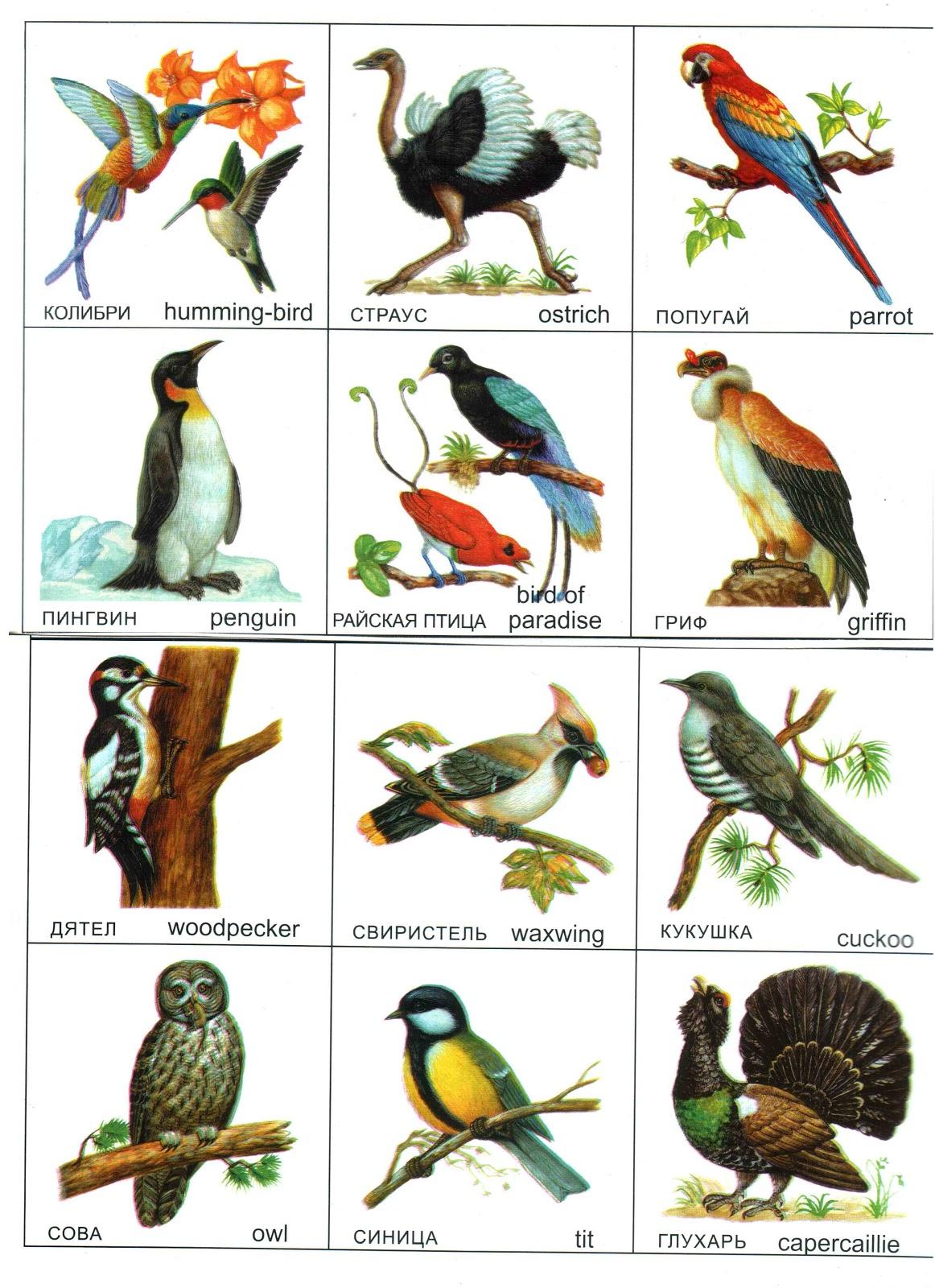 птица средней полосы крупного размера 673662354