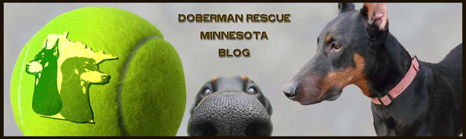 Doberman Rescue Minnesota