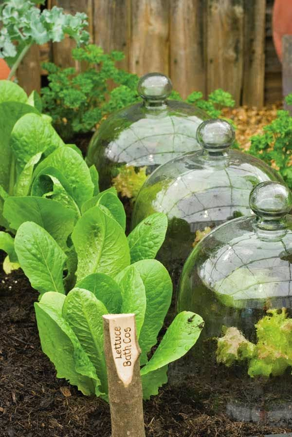 http://www.motherearthliving.com/gardening/vegetable-gardening/10-ways-grow-shade-garden-zmgz13mjzmel.aspx?newsletter=1&utm_content=05.02.13+MEL&utm_campaign=MEL&utm_source=iPost&utm_medium=email