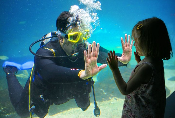 New Jersey Public Aquarium : Travels and Visits: Adventure Aquarium