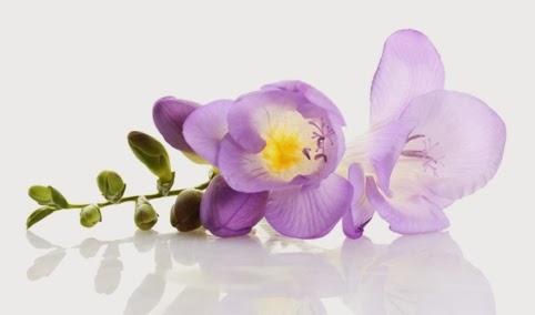 Natural & Botanical Skincare