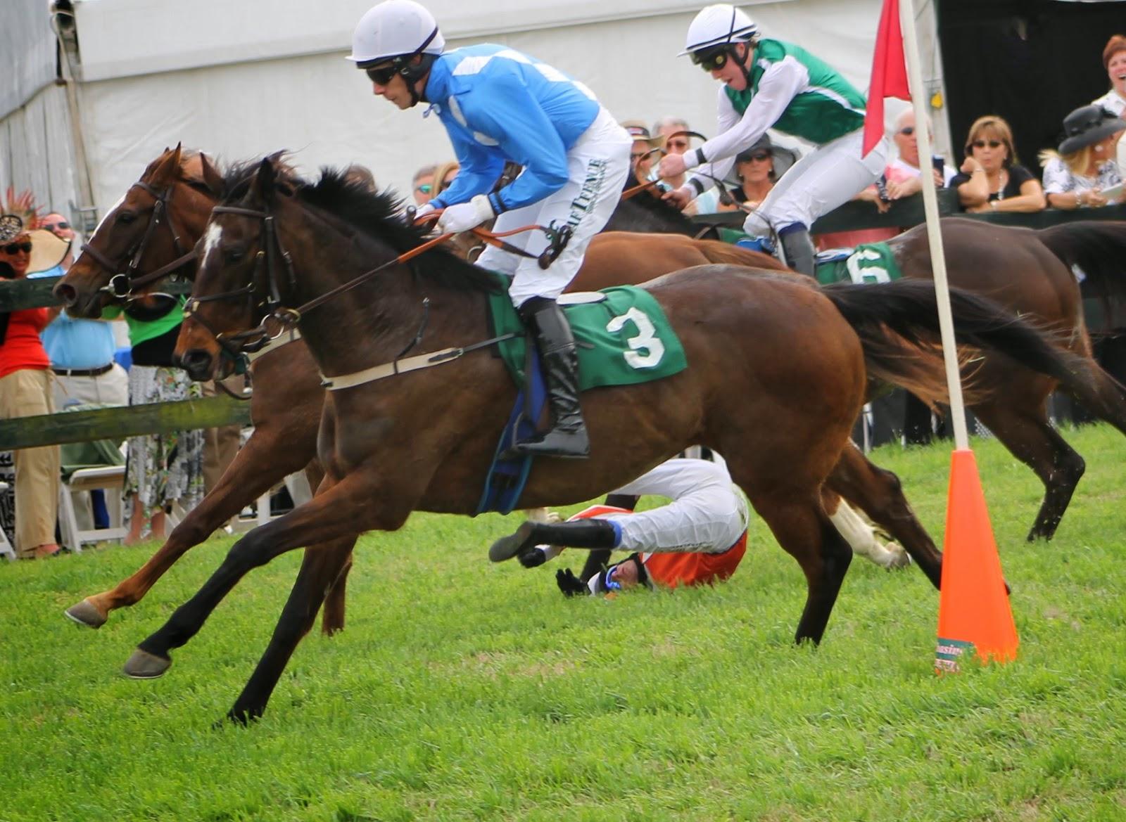 equestrian, horses