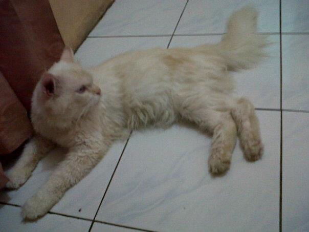 Epoy Cat S Breeder