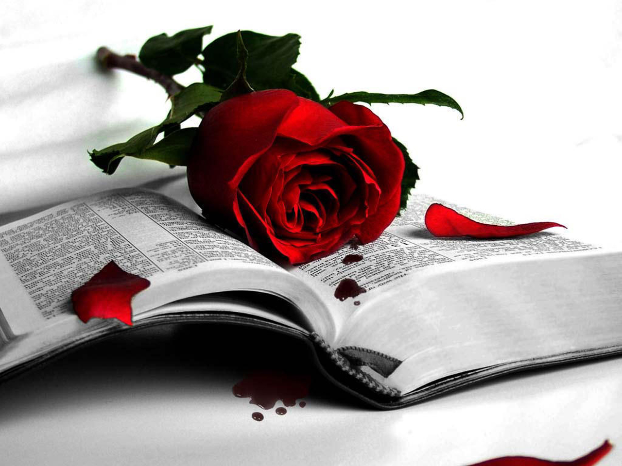 http://3.bp.blogspot.com/-3_0T3cM5lVI/UL_w4ZGOclI/AAAAAAAAAgc/srlbL7EhgwE/s1600/wonderful-love-me-red-rose-wallpaper.jpg
