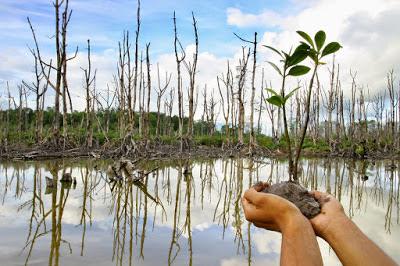 mangrove-gunung-anyar