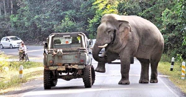 Elefant Khao Yai Nationalpark