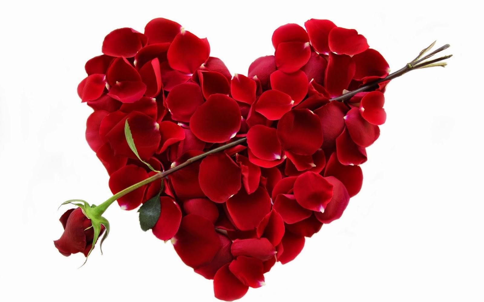 Le Regaliamo Nelle Ricorrenze : Conosciamo Meglio Il Fiore Più Diffuso E Più  Gradito La Rosa.