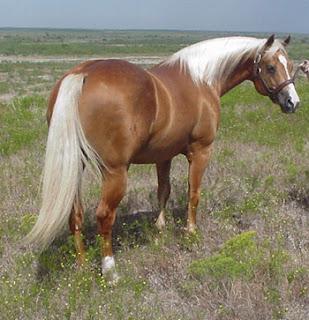 caballos cuarto milla | caballos