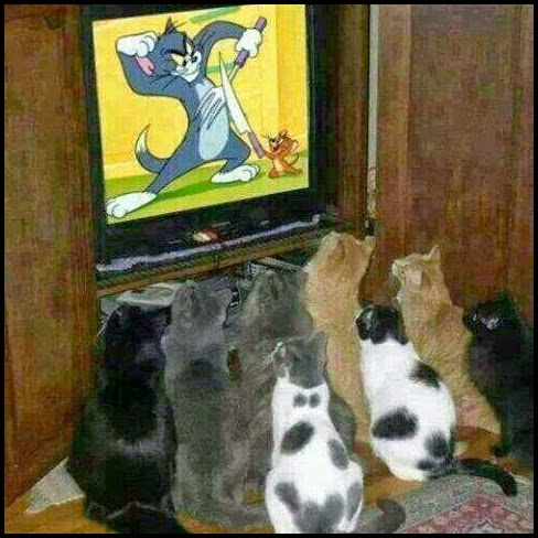 Camada de gatos viendo a tom y jerry en la TV