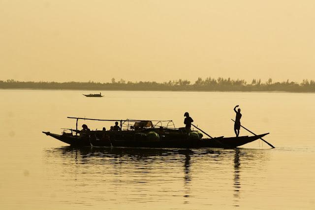 sunderbans delta mangrove