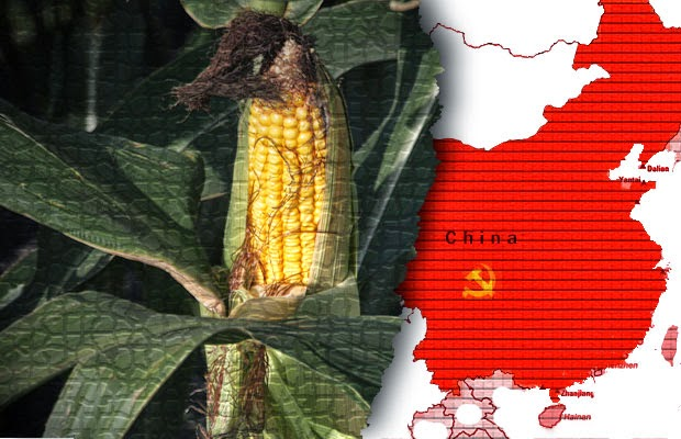 china rejects corn