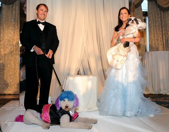 photos of worlds most expensive pet wedding dogs pet fashion couture