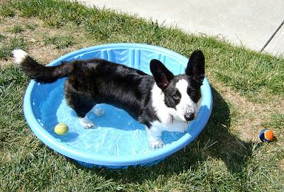 dog, dog pools