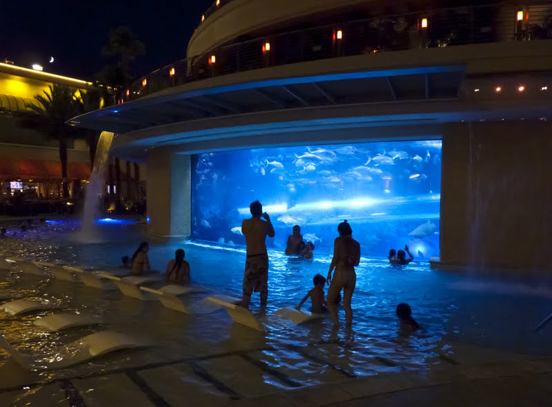 Vegasimages Swimming With The Sharks At The Golden Nugget
