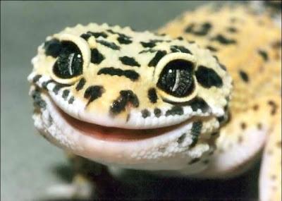 linda+sonrisa Imagenes chistosas de animales...