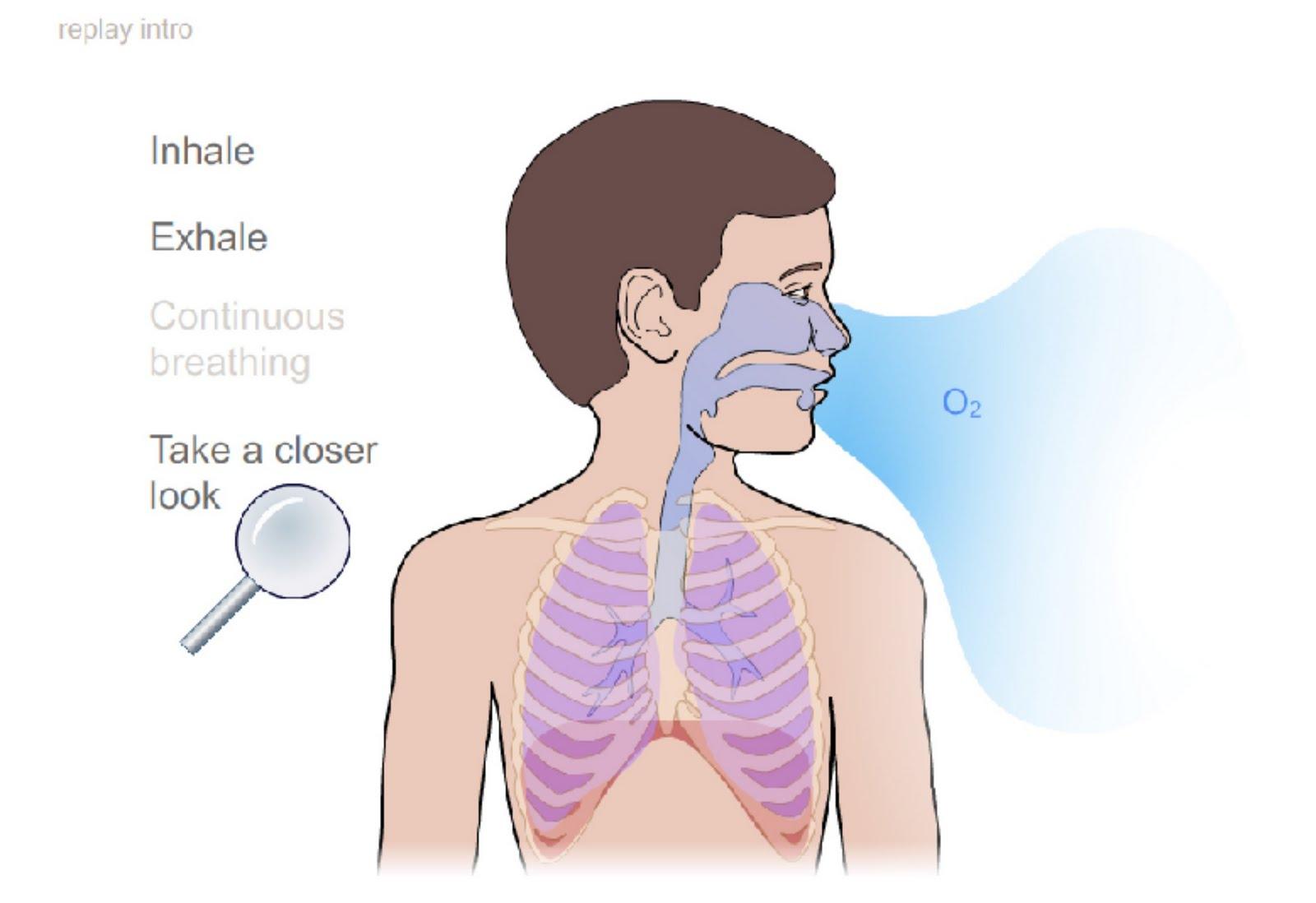 Breathing Swf    Pernapasan Swf