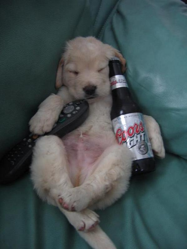 funny drunk pictures. Most Funny Drunk Animals