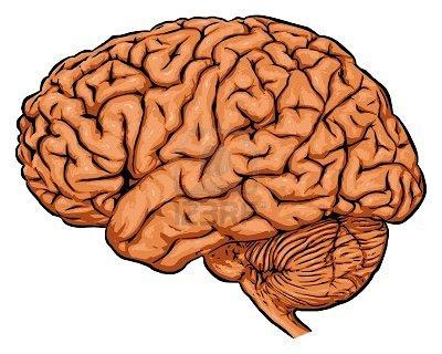 2470180-brain.jpg