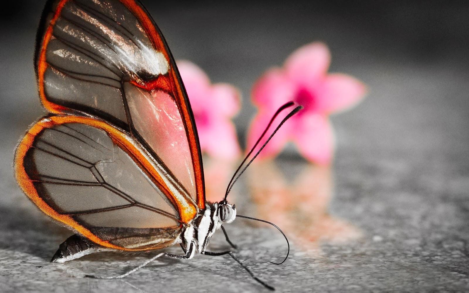 Wallpaper met vlinder met doorschijnende vleugels.
