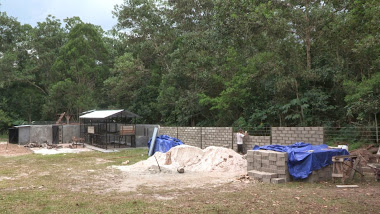 Construction of the main enclosure which will surround the forest in the background