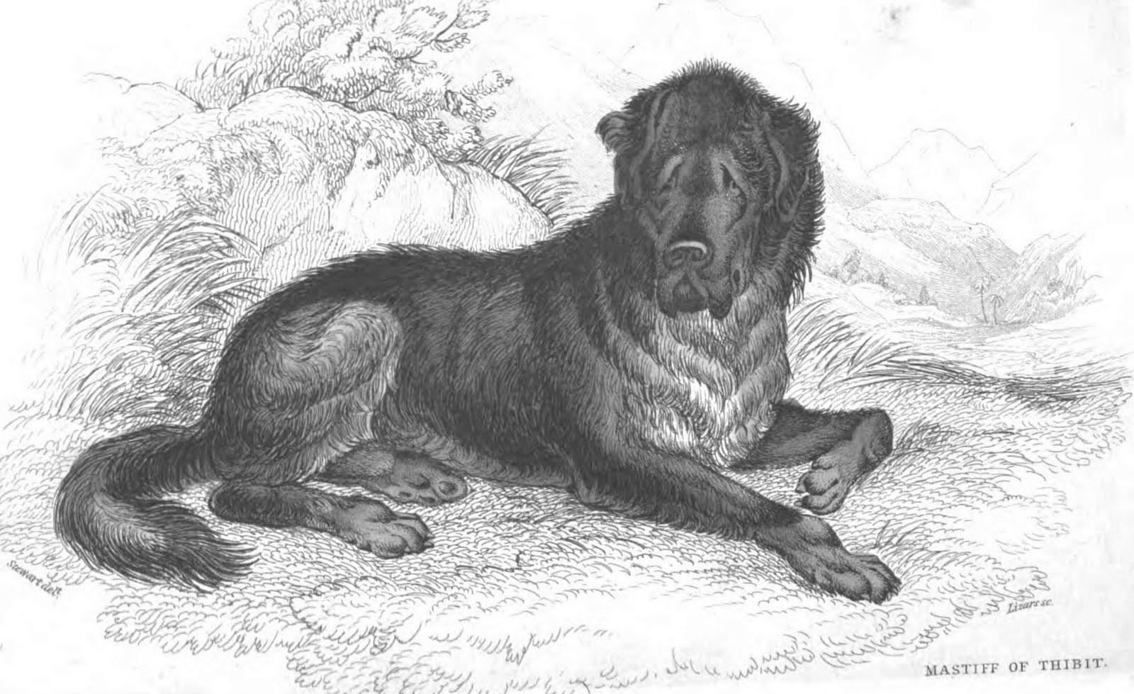 Molossian Dogs Rome
