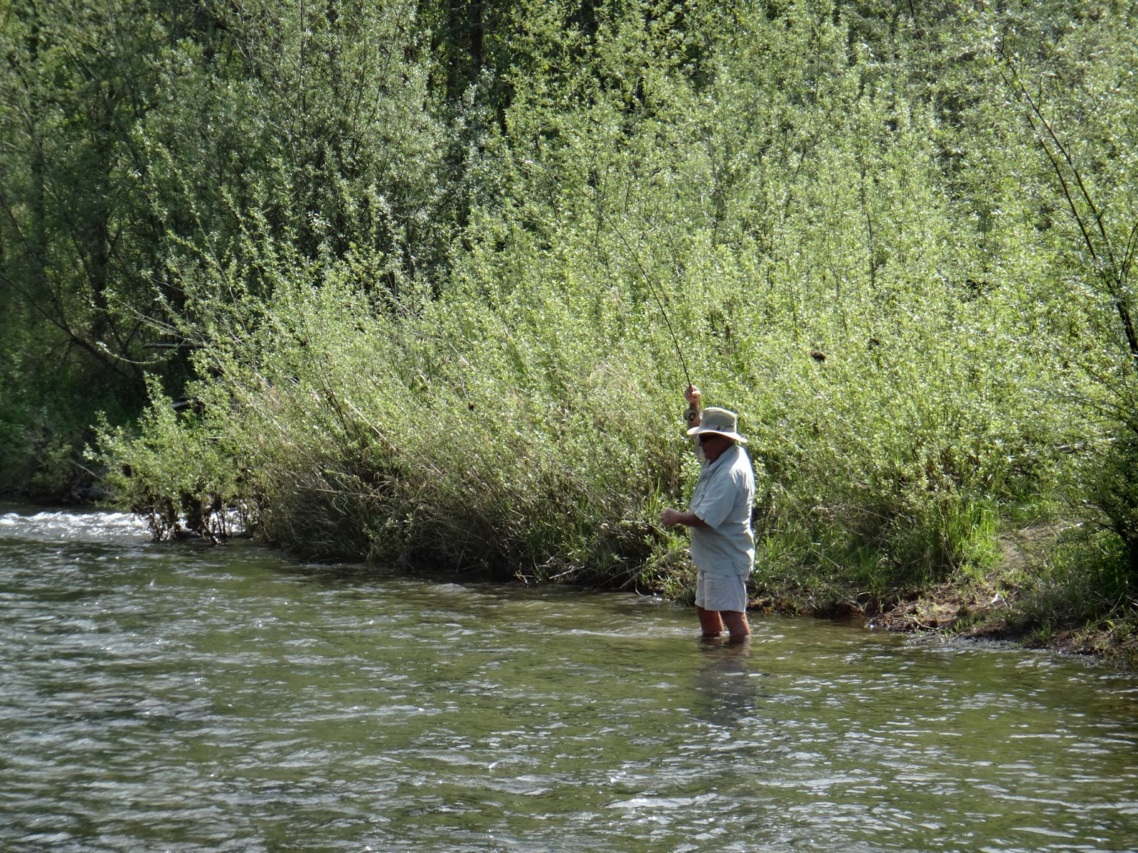 Brian marz 39 s fly fishing oregon blog end of april 2013 for Mckenzie river fishing report