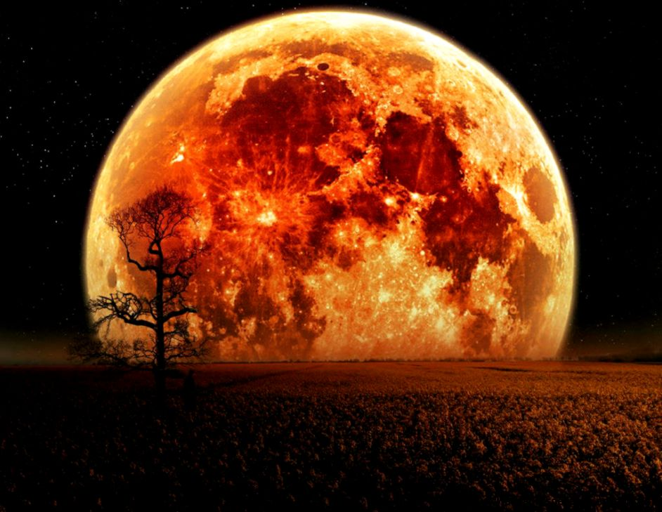 Wallpaper   orange moon   Zoovio   Wallpaper   orange moon