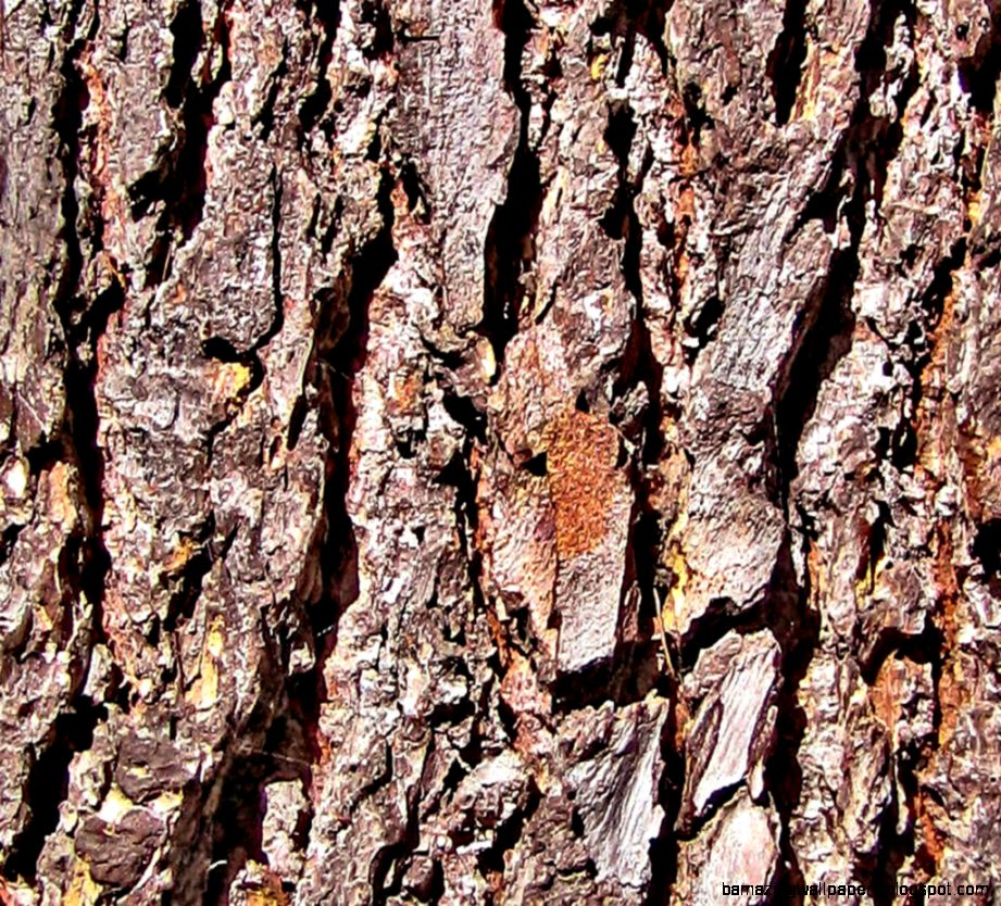 Tree Trunk Texture Photo by sui ming  Photobucket