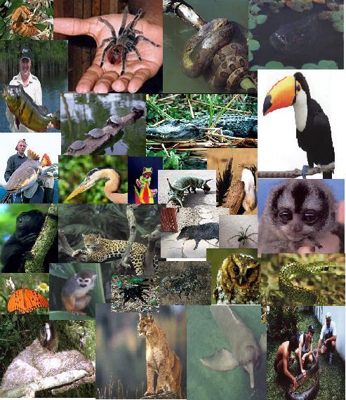 tupida, entre los muchos representantes de la fauna se destacan los