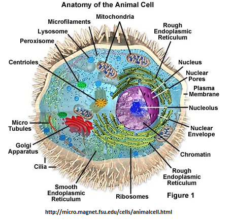 BIOSMAN8PKU: RPP KLS X Ruang lingkup Biologi .