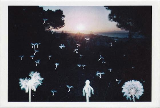 dirty photos - time - cretan landscape photo of flying plants