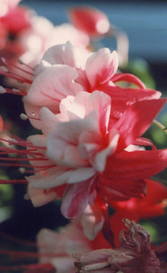 http://ghandchi.com/flower.bmp