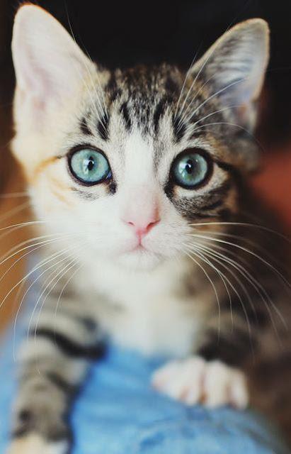 gatito mirada tierna