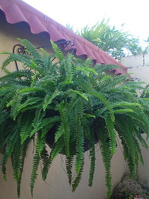 soluciones para el hogar y el amor plantas f ciles de cuidar