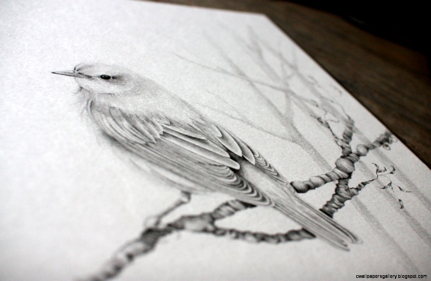 Popular items for bird pencil drawings on Etsy