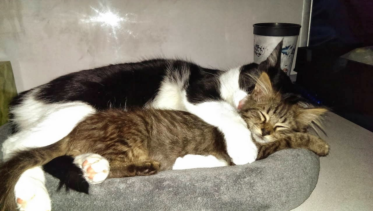 Funny cats - part 94 (40 pics + 10 gifs), cat pictures, cat spooning