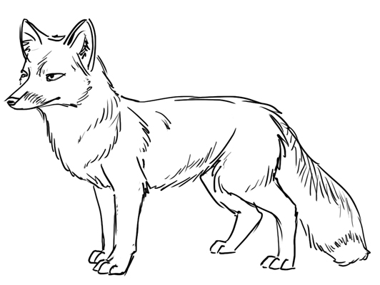 Line Drawing Fox : Outline drawing line painting