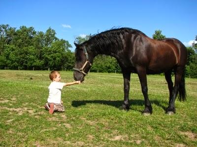 friesen die sch nsten bilder der beliebten pferderasse kleinanzeigen f r pferde. Black Bedroom Furniture Sets. Home Design Ideas