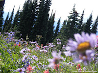 NAMC montessori style vacations canada's natural bounty forest flowers