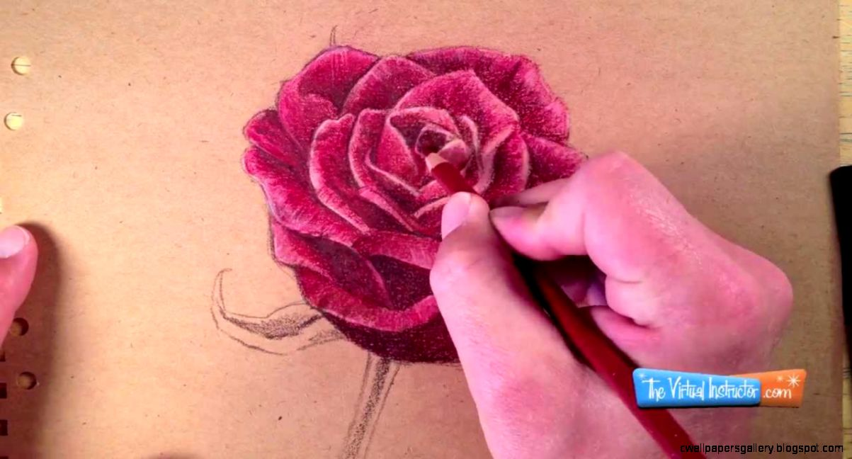 How to Draw a Rose with Colored Pencils   YouTube