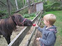 apple picking, apple farm, petting zoo, horse