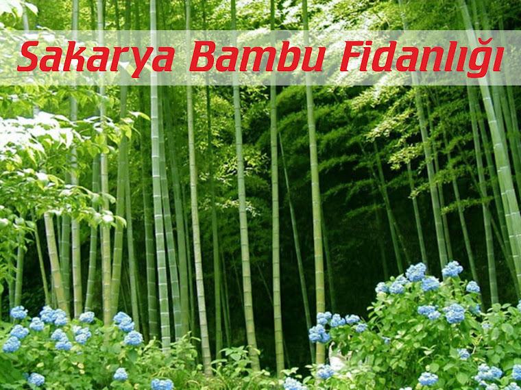 Sakarya Bambu Fidanlığı