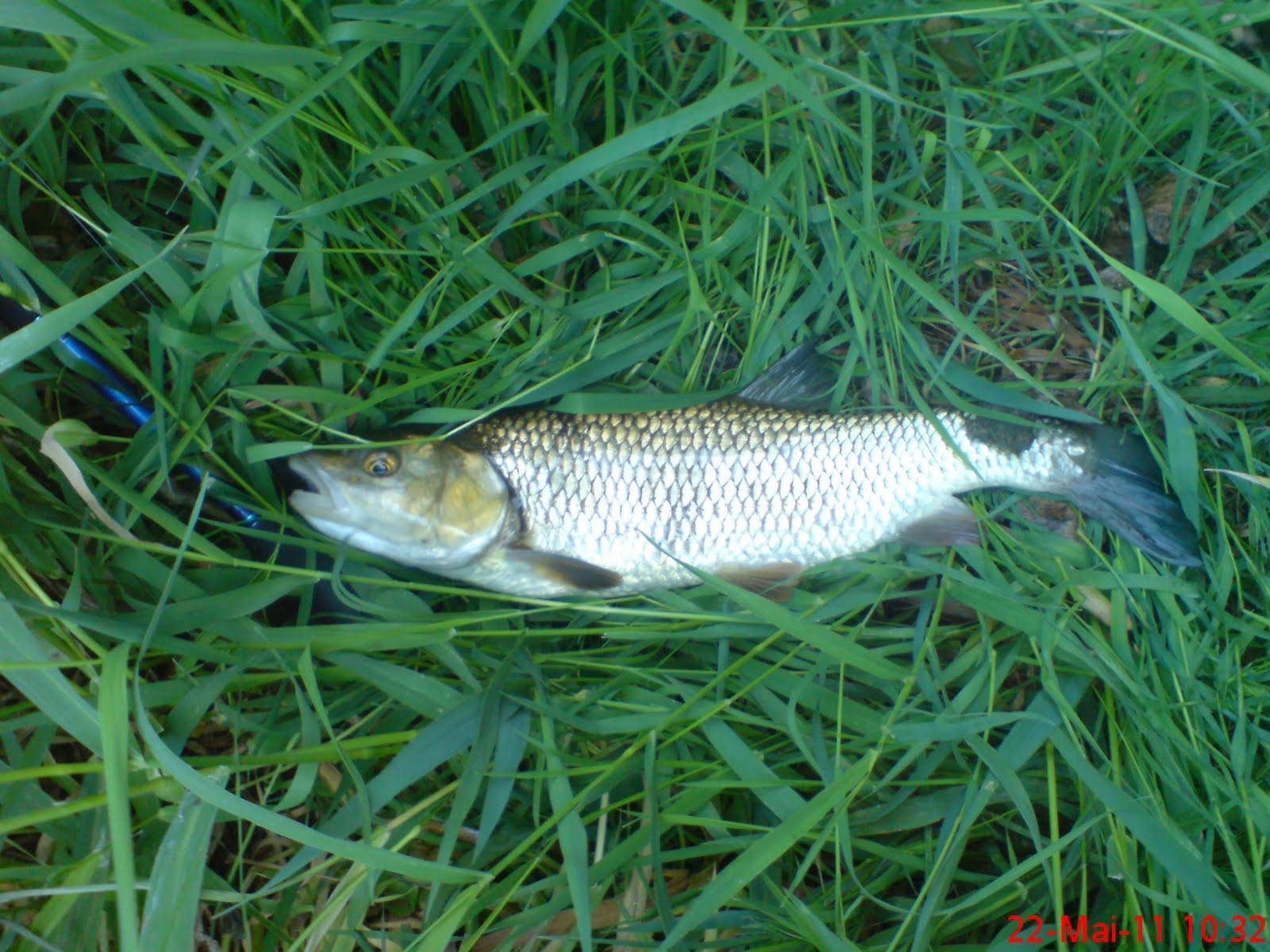 rebelote fish 39 n style