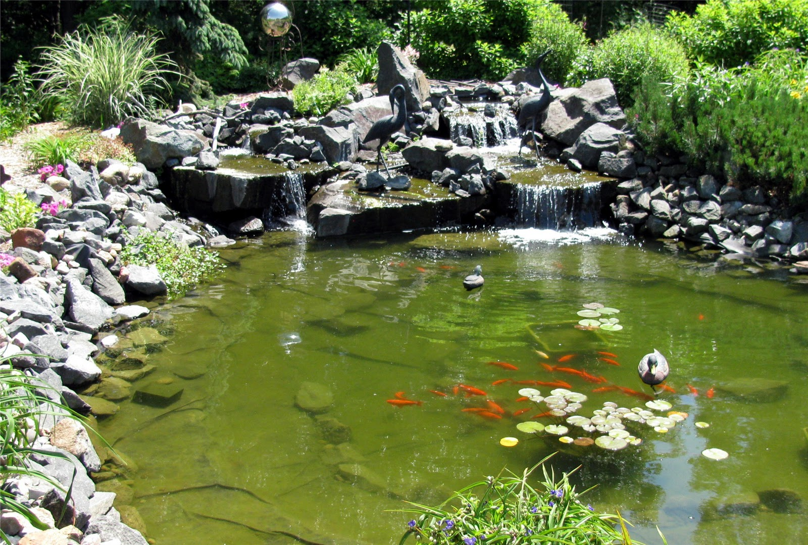How to maintain a koi pond through a minnesota winter for Goldfish pond plants