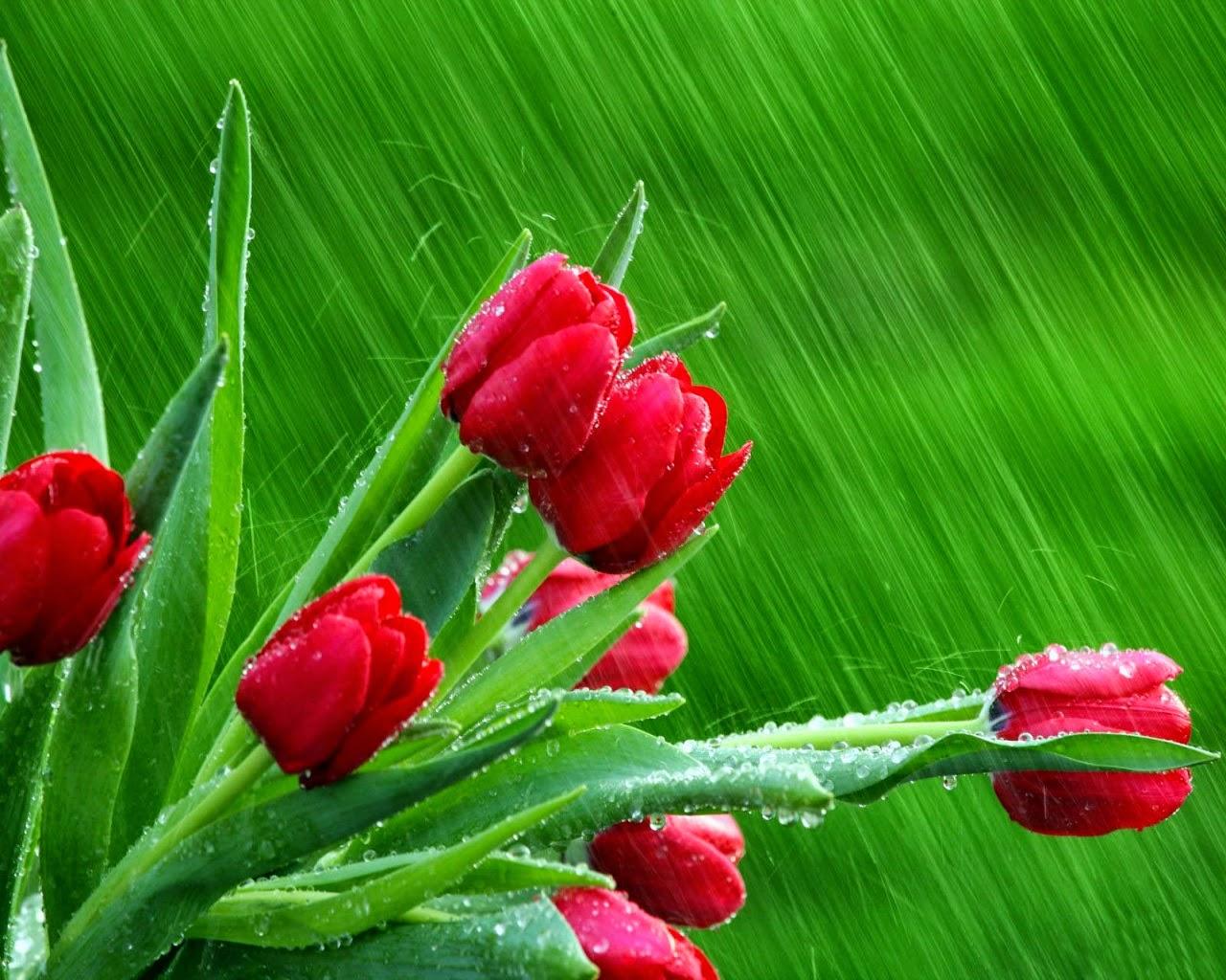 Những giọt sương ban mai trên các loài hoa
