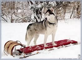 Category:Snow Dogs characters | Disney Wiki | FANDOM ...