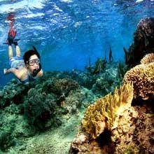 Menjangan Island Tour Package