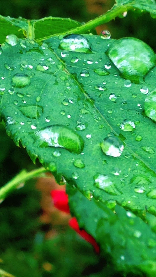 Green Rose Leaf   Galaxy Note HD Wallpaper