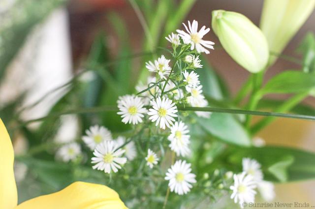 fleurs,marguerites,instantanés,the mood
